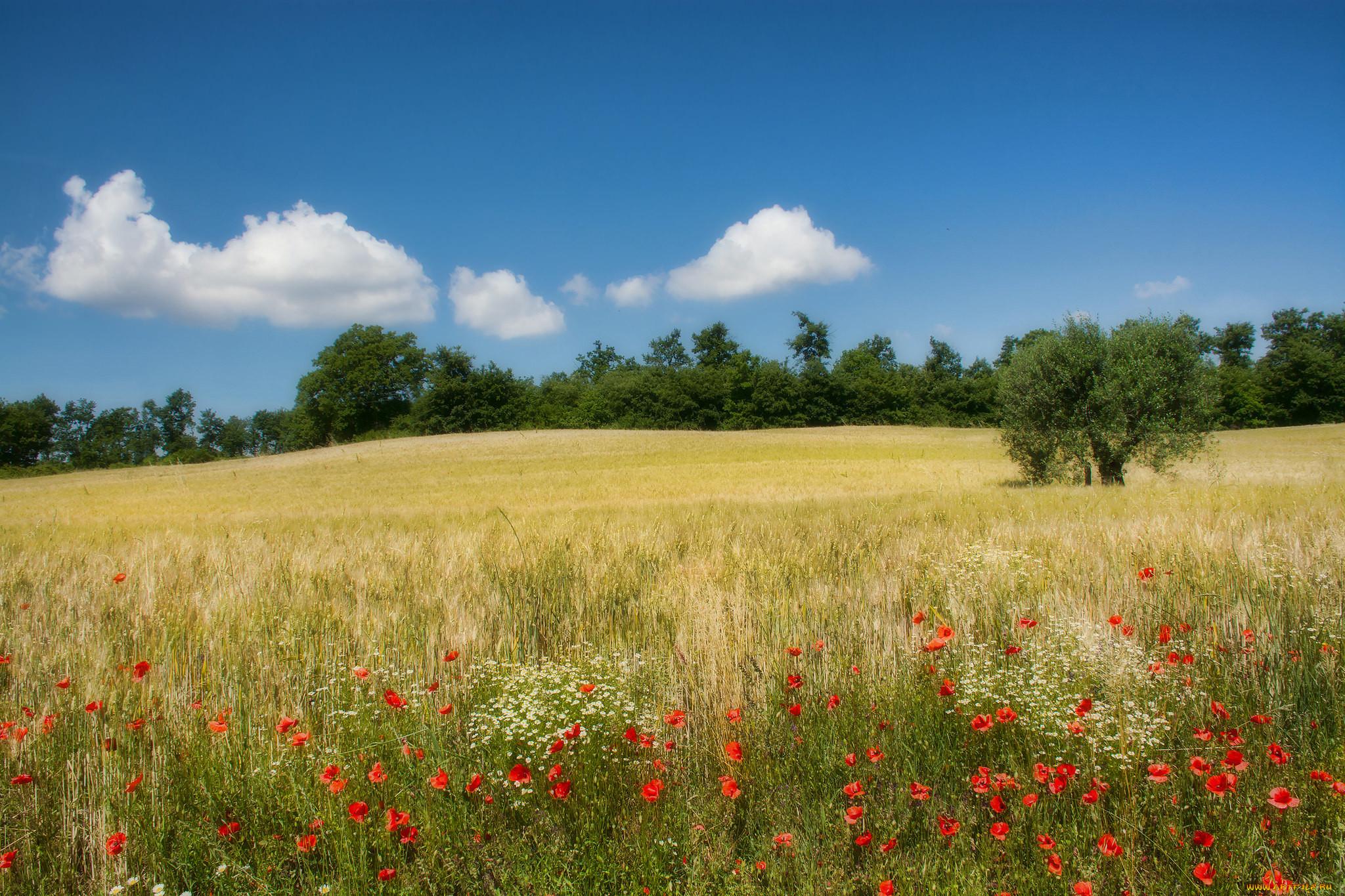 Русская природа картинки поле
